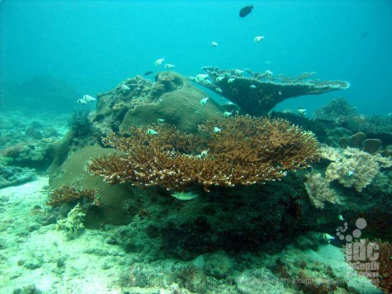 Donald Duck Bay is a shallow reef dive in The Similans