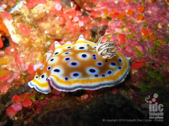 Boulder City in The Similans is a great place for macro and nudibranchs