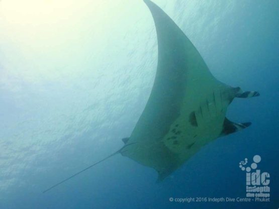 Dive The Similans and dive with Mantas and Indepth Dive Centre