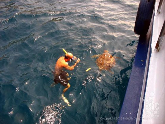 Snorkelling with Turtles with Indepth Dive Centre in The Similans