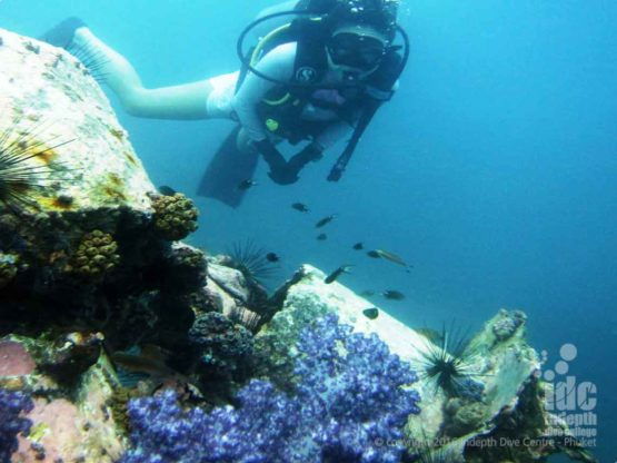 Purple Soft Corals make up the reef at Hin Muang
