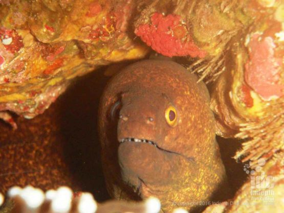 Twin Cheeks has lots of Spotted Moray Eels