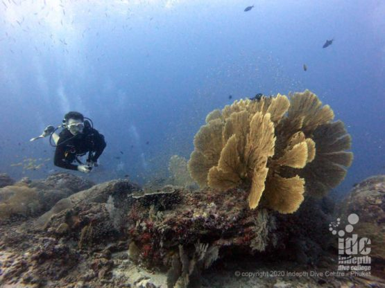 This amazing seafan is one of the highlights and landmarks of Tachai Pinnacle dive site - top Thailand dive sites