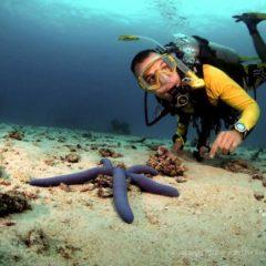 Diving Tachai Reef
