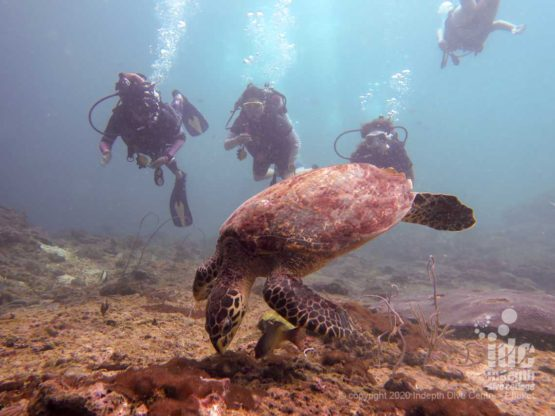 Encounters with sea turtles are frequent at Turtle Rock, this is what gives the dive site its name