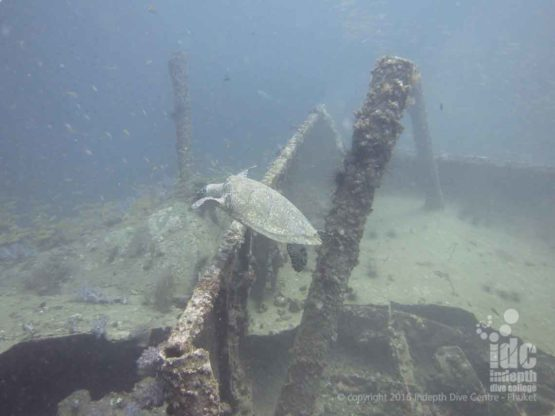 Large Green Turtle on The King Crusier Phuket Wreck Dive