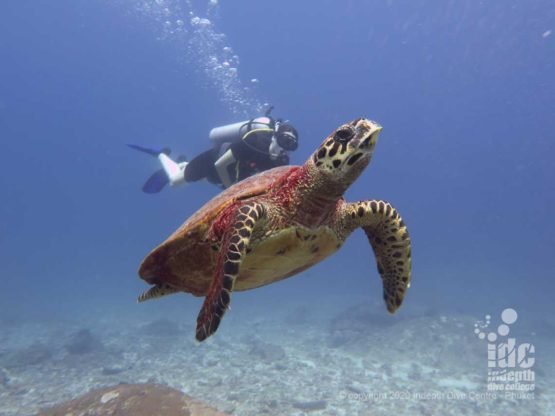 Sea Turtles are a frequent encounter when diving Donald Duck Bay Similan Islands Dive Site