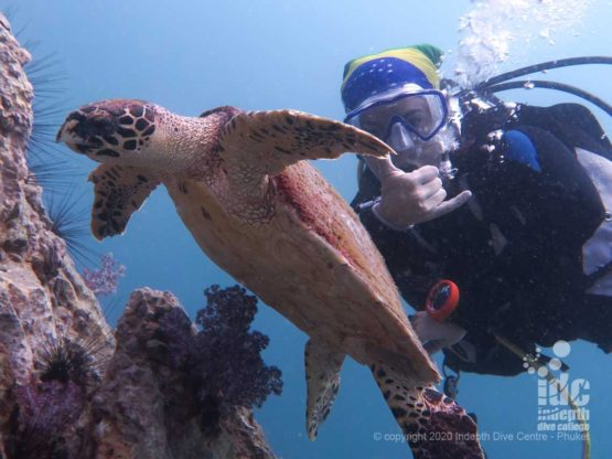 Turtle encounter at Shark Point Phuket