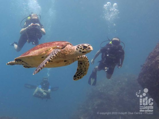 Close encounter with sea turtle at Three Islets - Myanmar Dive Sites