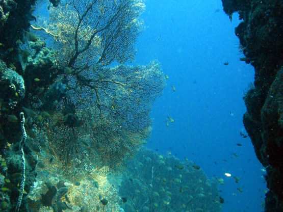 Diving underwater canyons at Ko Bida Nok with Indepth Dive Centre