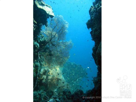 Underwater Canyons at Fan Forest Pinnacle Burma