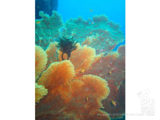 Underwater Gorgonians at Fan Forest Pinnacle