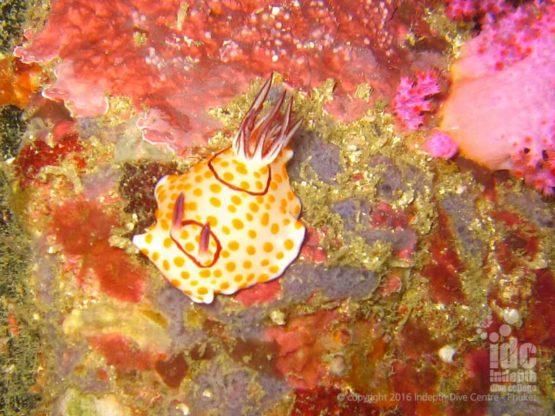 Underwater Macro Photography at Three Islets Burma
