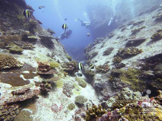 The boulders covered in healthy hard coral are a unique feature of West of Eden dive site
