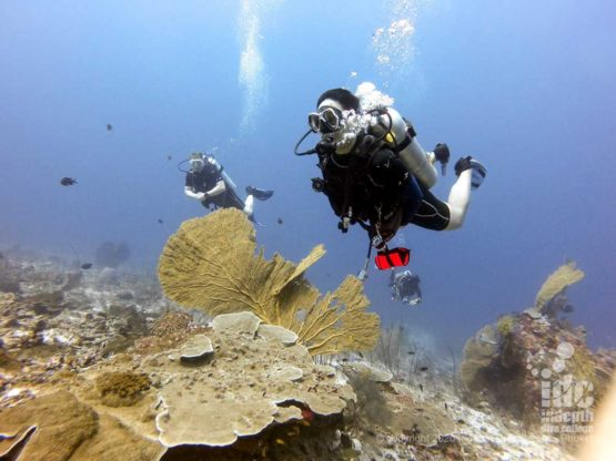 Diving along a pristine coral reef at West of Eden - Similan Isands