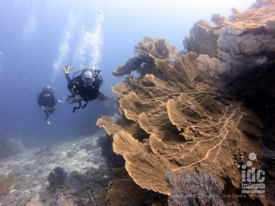 The giant sea fans of West of Eden in Similan Islands are unique