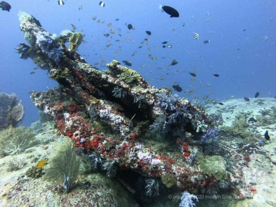 West of Eden is home to the most stunning coral bommies