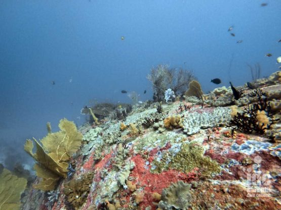 The granite boulders of West of Eden are covered by pristine soft and hard corals