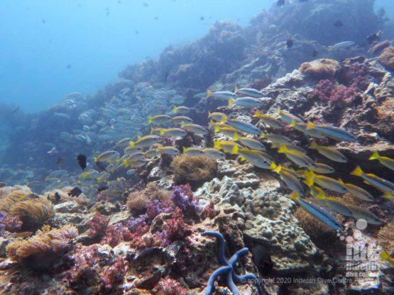 Healthy reef at Western Rock Burma