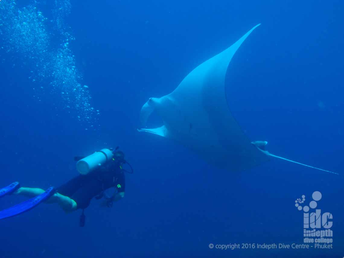 Similan Liveaboard trip is one way to be sure to see a Manta