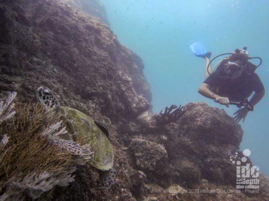 Turtle encounter at Mai Thon Island diving Phuket