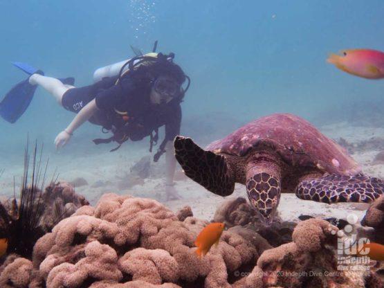 Turtle at Koh Mai Thon Phuket Diving