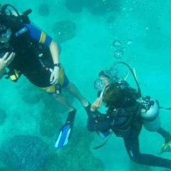 Koh Mai Thon Dive Site – Indepth Dive Centre Phuket