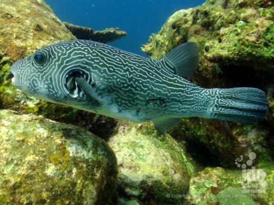 Camera Bay dive site is found at Racha Noi Island