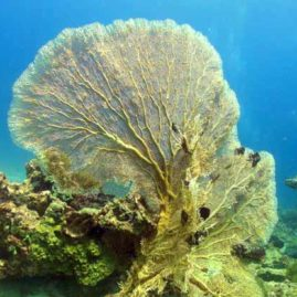 Racha Noi Phuket: Camera Bay is full of Sea Fans