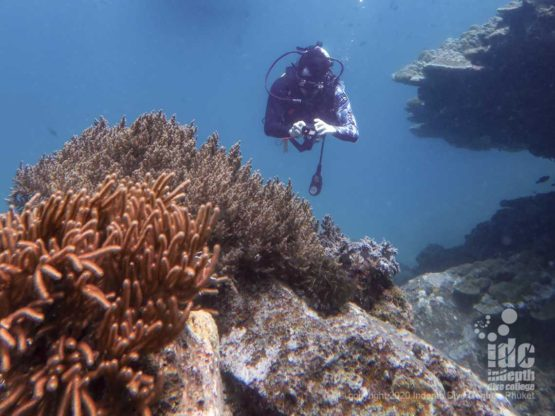 Healthy coral reef at Camera Bay - Diving Phuket