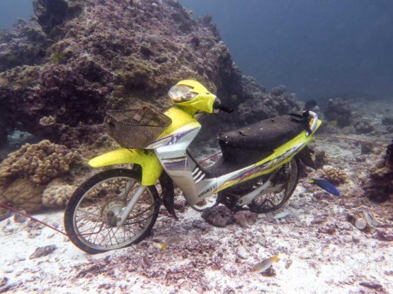 This motorbike looked like new when it was places at Banana Rock to create some artificial reef. Now it is very different as life has taken over it