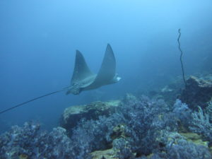 Choosing your PADI Advanced Dives on Phuket is awesome