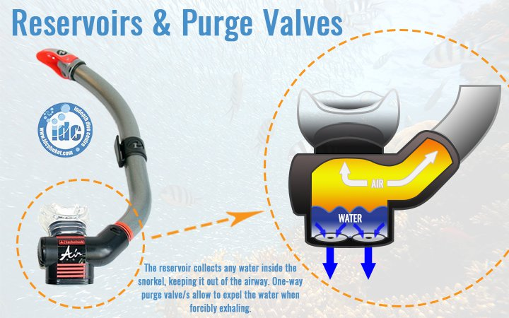 Snorkel purge valves and reservoirs